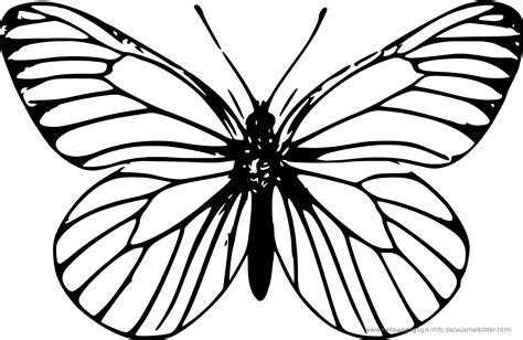 Schmetterling Malvorlagen Xl