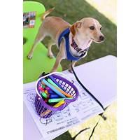 Secrets to dog training: stop your dog's behavior problems! secret