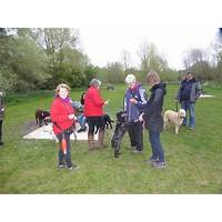Secrets to dog training: stop your dog's behavior problems! coupon code