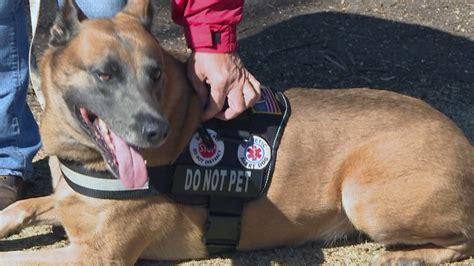 service dog training killeen texas.aspx Image