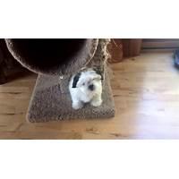 Shih tzu dog training for any shih tsu dog or puppy owner methods