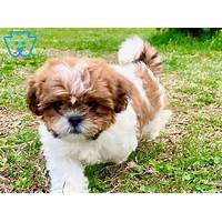 Shih tzu dog training for any shih tsu dog or puppy owner work or scam?