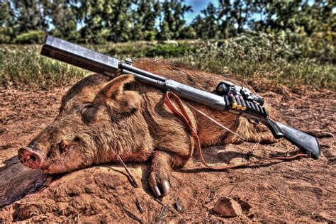 Shooting Wild Boar With Shotgun