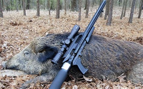 Shooting Wild Hogs With Air Rifle