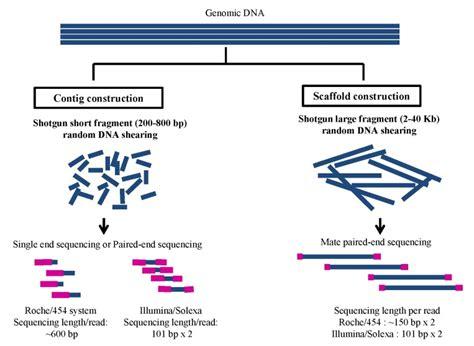 Shotgun Sequencing Illumina