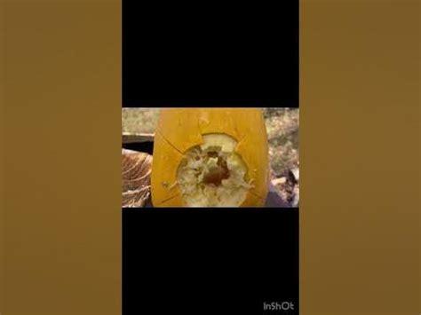 Shotgun Vs Pumpkin