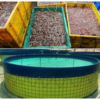 Cheapest shrimp farming guide