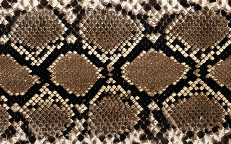 Snakeskin Wallpaper HD Wallpapers Download Free Images Wallpaper [1000image.com]