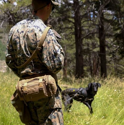 specialized search dog training Image