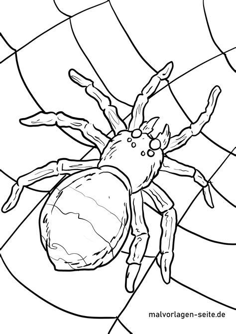 Spinne Malvorlage
