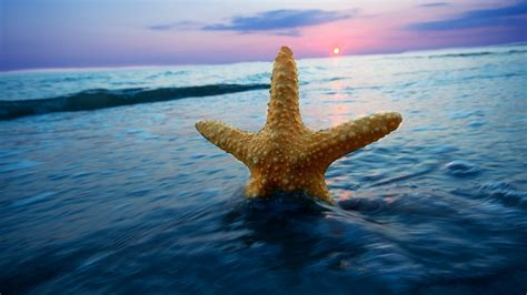 Starfish Wallpaper HD Wallpapers Download Free Images Wallpaper [1000image.com]