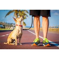 Starting a dog walking business dog walkers city inexpensive