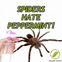 Stink bug control guide great conversions, easy traffic inexpensive