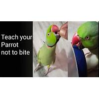 Stop your parrot from biting, train tricks, speech & more online coupon