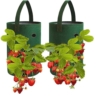 Strawberry planter amazon Image