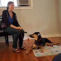 Success dogs come when called dog training program promo codes