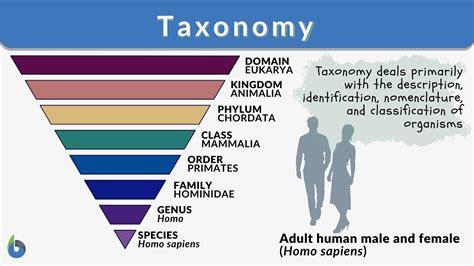 Template Definition Biology CV Templates Download Free CV Templates [optimizareseo.online]