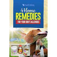 Cash back for the dog allergy cure: the natural way