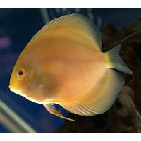 The golden guide book of discus fish care step by step