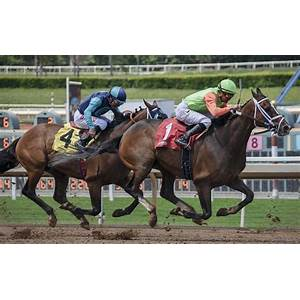 The racing tipsters professional horse racing tips service discounts