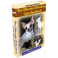 The ultimate chihuahua care handbook secret