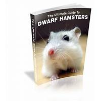 The ultimate guide to dwarf hamsters comparison