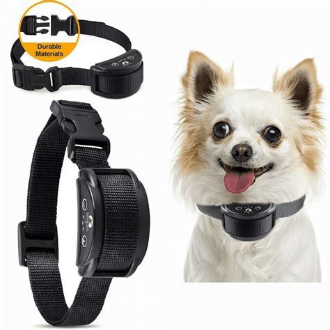 tiny dog training collar Image