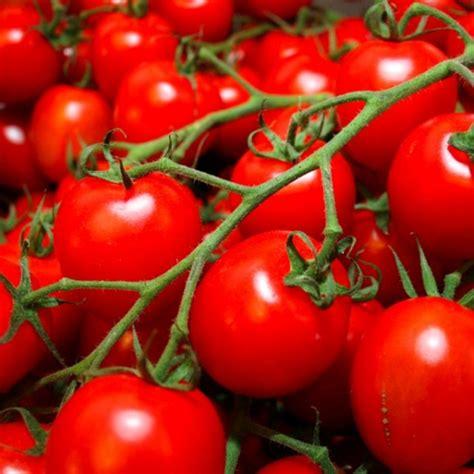 Tomato In Spanish Watermelon Wallpaper Rainbow Find Free HD for Desktop [freshlhys.tk]