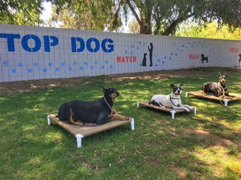 top dog boarding and training gilbert az.aspx Image