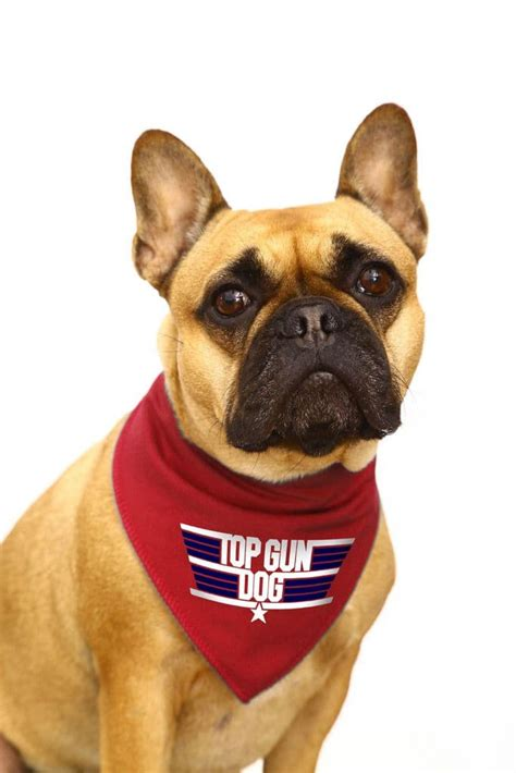 Top Dog Gun Store