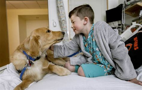 training hospital therapy dogs.aspx Image