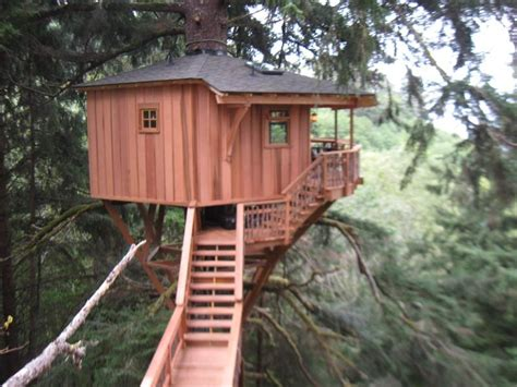 Tree house builder show Image