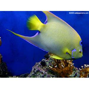 Tropical fish coupon code