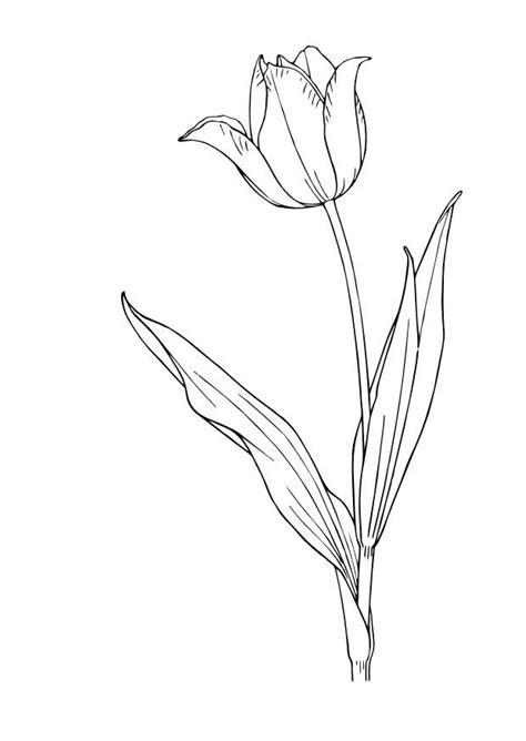 Tulpe Malvorlage