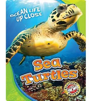 Turtle Kids Book