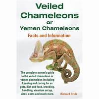 Veiled chameleons or yemen chameleons facts and information guide guide