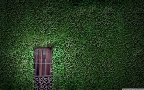 Vine Wallpaper HD Wallpapers Download Free Images Wallpaper [1000image.com]