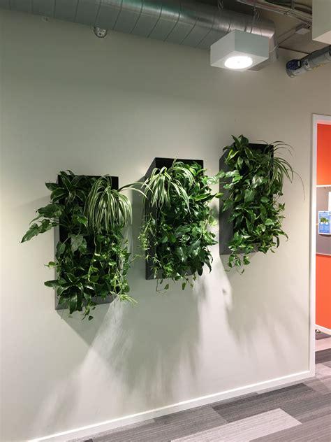 Wand Pflanzen