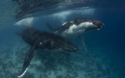 Whale Wallpaper HD Wallpapers Download Free Images Wallpaper [1000image.com]