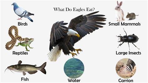 Desert-Eagle What Eats Eagles In The Desert.