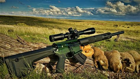 What Is The Best Varmint Rifle