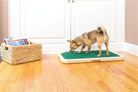 when to start dog potty training.aspx Image