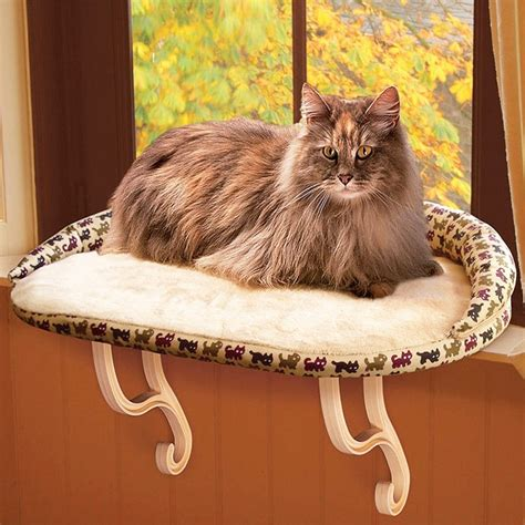 Window perch for cats Image