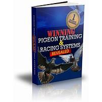 Winning pigeon training and racing systems revealed promo
