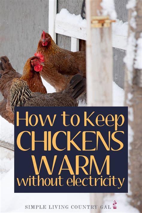 Winter chicken coop care tips Image