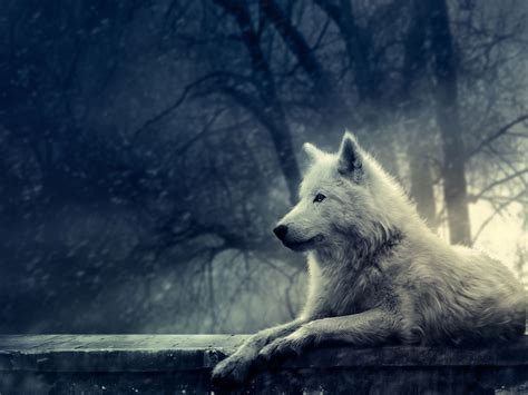 Wolf Wallpaper HD Wallpapers Download Free Images Wallpaper [1000image.com]