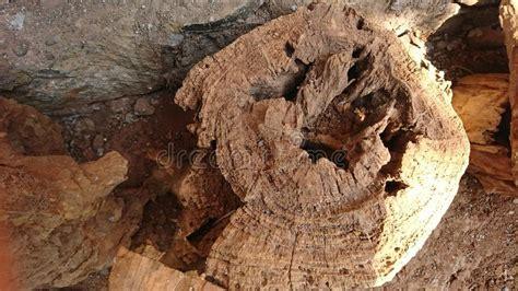 Wood corrosion Image