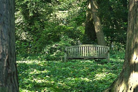 Wooden woods Image